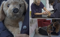 RSPCA ปล่อยคลิปซึ้งวันคริสต์มาส สะท้อนชีวิตสุนัขถูกทิ้ง !
