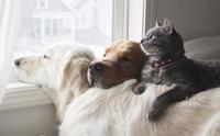 ส่องความน่ารัก! 2 สุนัขกับ 1 แมวมิตรภาพดีๆ ที่จะทำให้คุณอมยิ้ม