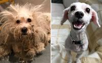 สุนัขจรจัดขนสังกะตังยิ้มสดใส หลังได้รับความช่วยเหลือ !