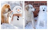 รวมภาพหนาวๆ ของน้องหมากับตุ๊กตาสโนว์แมน น่ารักไปอีก