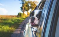 แจกสูตร 5 วิธีป้องกันไม่ให้น้องหมาเมารถ !