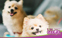 5 วิธีเสริมดวงให้ทั้งคุณและน้องหมาแฮปปี้รับปีใหม่