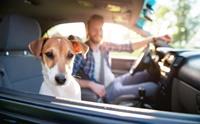 อยากพามาเที่ยวปีใหม่แบบไร้ปัญหา ... มาฝึกหมานั่งรถกัน!!