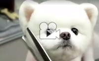 หมาหรือตุ๊กตาหมี ทำไมน่ารักขนาดนี้ !