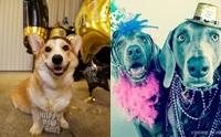 รวมแฟชั่นสุดแนวของน้องหมาปาร์ตี้ส่งท้ายปีเก่า