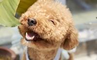 จัดอันดับ พรปีใหม่ 5 ข้อที่เจ้าของอยากขอให้น้องหมา