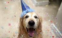 How To ... 5 วิธีคิดเปลี่ยนชีวิตให้คุณและน้องหมาสุขตลอดปีตลอดไป
