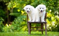 จัดอันดับ 5 สายพันธุ์สุนัขที่อยู่บ้านลำพังได้ เจ้าของหายห่วง