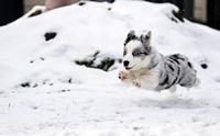 รวมภาพความสนุกของน้องหมาในวันหิมะตก