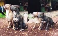 นี่มันหมาคู่แฝดชัด ๆ ทำตามคำสั่งเป๊ะมาก !!