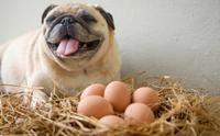 11 อาหารของมนุษย์ที่ดีต่อสุขภาพน้องหมา