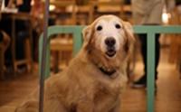 Dogilike Review : รักหมาชอบหมาให้มา TAIWAN บอกเลยว่า 'ของมันต้องไป'