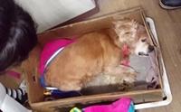 เจ้าของจับสุนัขสูงวัยใส่กล่องทิ้งถังขยะเพราะไม่อาจทนดู หากตายต่อหน้า !