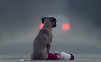 จุดเริ่มต้นของปัญหาหมาจรในสังคมไทย ... ทำไมคนถึงตัดสินใจทิ้งสุนัข