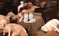 มานับกันว่ามีหมาทั้งหมดกี่ตัว?