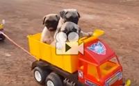 พาน้องไปนั่งรถเล่นกัน !