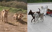 จัดอันดับ 5 ฉากสุดซึ้งจากภาพยนตร์น้องหมา ที่คนรักสัตว์ต้องหามาดู !