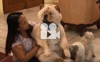 หมาหรือหมี ทำไมหนูน่ารักขนาดนี้ลูก !