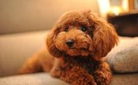 5 สายพันธุ์น้องหมาสุดคิ้วท์ทีคนญี่ปุ่นนิยมเลี้ยงมากที่สุด