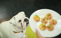 แชร์เก็บไว้เลย! 3 Step ง่าย ๆ ให้น้องหมากินอาหารได้หมดจาน