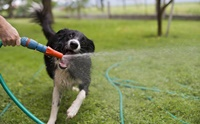5 Step เบิร์นพลังงาน ลดความเครียดน้องหมาในหน้าร้อน