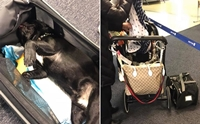 สลด! สุนัขตายบนเครื่องบิน หลังแอร์โฮสเตสให้จับใส่บนชั้นที่เก็บกระเป๋า