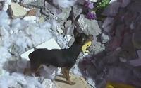 สุนัขซื่อสัตย์ไม่ยอมห่างซากบ้าน หลังเจ้าของตายยกครัวในเหตุดินถล่มที่บราซิล!