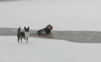 นาทีสาวใจกล้าไม่ลังเล ลงไปช่วยชีวิตสุนัขตกธารน้ำแข็ง (มีคลิป)