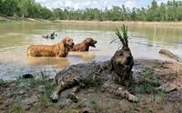 รวมภาพสุดฮา ร้อนนักน้องหมาเลยขอหนีไปแช่น้ำคลายร้อน