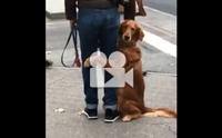 คลิปน้องหมาน่ารักที่กอดขาไม่อยากให้เจ้านายไปไหน !