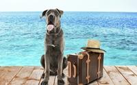 5 สิ่งห้ามทำกับน้องหมาในหน้าร้อน ถ้าทำอยู่เลิกซะ !!