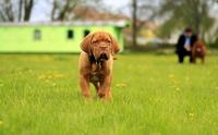 จัดอันดับ 5 โรคฮิตของน้องหมา พบบ่อยในช่วงหน้าร้อน !