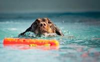 ข้อควรระวัง ! ซัมเมอร์นี้รู้ไว้ก่อนพาน้องหมาแต่ละวัยไปว่ายน้ำ