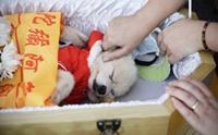 5 วิธีจัดการร่างน้องหมาเมื่อพวกเขาเสียชีวิต
