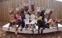 นี่มันกระต่ายน่ารัก ๆ ทั้งนั้นเลย !!
