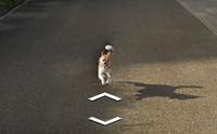 เผยภาพชวนยิ้ม! น้องหมาวิ่งตามรถ Google Street View ที่ญี่ปุ่น