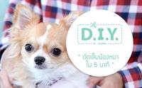 D.I.Y ตัดเล็บนน้องหมาแบบไม่ให้เกิดสงคราม ภายใน 5 นาที