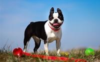 จัดอันดับ 5 สายพันธุ์น้องหมาที่ขาดน้ำไม่ได้ !!