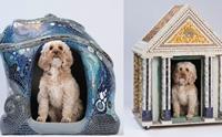 ศิลปินทั่วโลกร่วมออกแบบบ้านสุนัข เปิดประมูลนำเงินช่วยสุนัข !