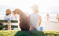 แชร์เก็บไว้เลย! 7 วิธีปฐมพยาบาลเมื่อพาน้องหมาไปเที่ยวทะเล