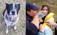 ฮีโร! สุนัขหูหนวกตาบอดช่วยชีวิตหนูน้อย 3 ขวบ หลงป่านาน 17 ชั่วโมง !