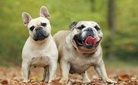 จัดอันดับ 5 สายพันธุ์น้องหมาตัวแม่!!