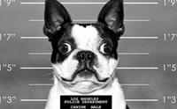 4 พฤติกรรมเลี้ยงหมาผิด ๆ มีสิทธิถูกลงโทษตามกฎหมาย