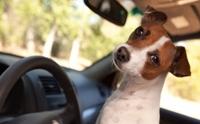 ฝึกน้องหมาให้คุ้นเคยกับการเดินทาง