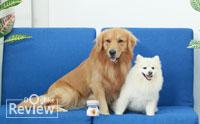 เริ่มต้นดูแลน้องหมาให้ห่างไกลโรคข้อเสื่อมด้วยผลิตภัณฑ์อาหารเสริมโคซีควิน เทสท์ เอชเอ