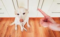 เลือกที่จะฝึกหรือตามเช็ด! พฤติกรรมฉี่ไม่เป็นที่ของสุนัขตัวโปรด