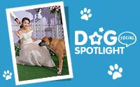 สัมภาษณ์พิเศษ ... ช่างภาพใจดี ถ่าย - โพสต์ ภาพหมาจรในงานแต่งจนหมาได้เจอเจ้าของ