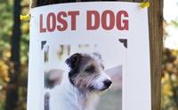 ตั้งสติเมื่อน้องหมาหายออกจากบ้าน ... ต้องทำยังไงบ้าง !