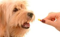 จัดอันดับ 5 ยา - ผลิตภัณฑ์อาหารเสริมสำหรับน้องหมาที่ผู้เลี้ยงซื้อใช้เอง แล้วมักจะเสี่ยงเป็นอันตราย