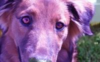 5 เรื่องที่คน(บางคน)ชอบทำและความเชื่อผิด ๆ เกี่ยวกับน้องหมา